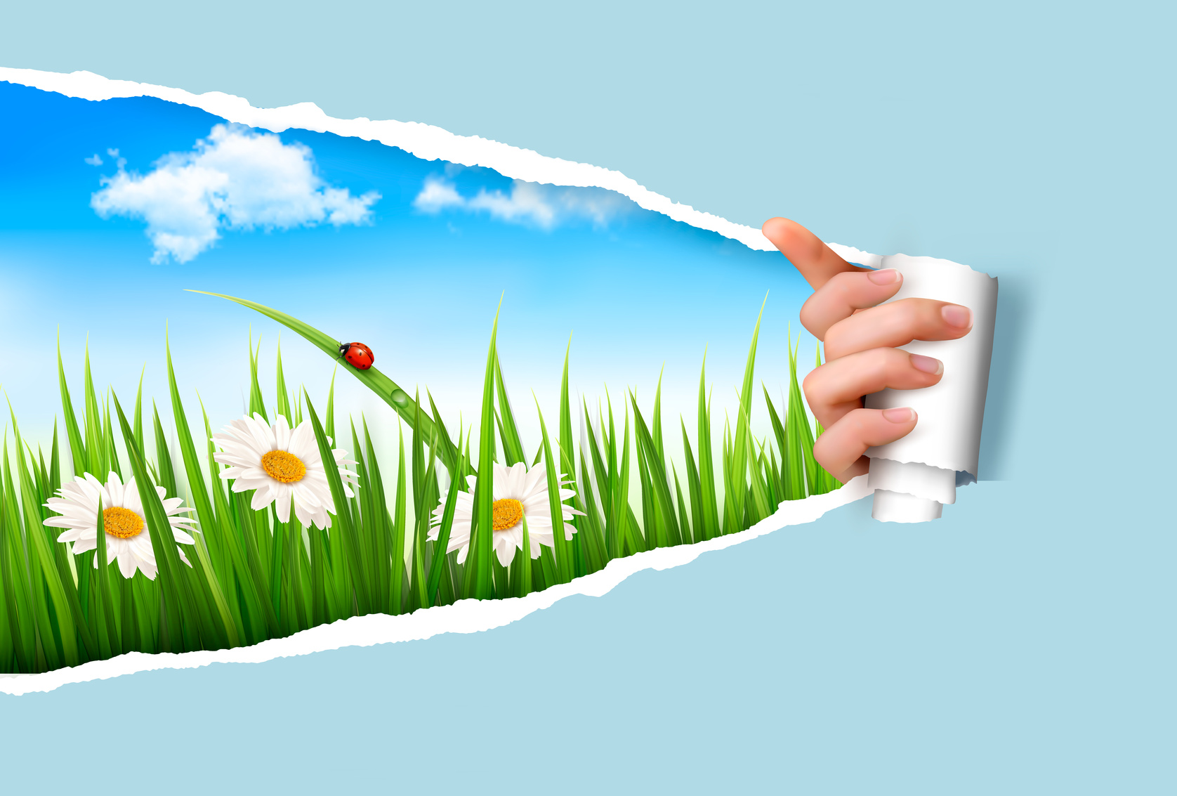Spring Background With Flowers Grass And A Ladybug Vector