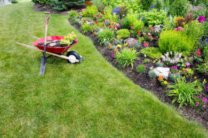 Mowing Tips for Your Lawn