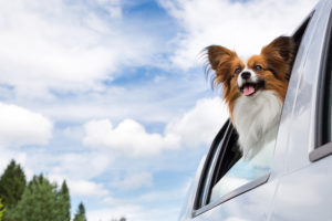Taking Your Pet on a Road Trip