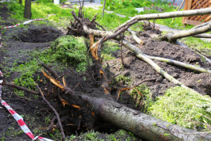 Tree Maintenance Tips for a Healthy Yard